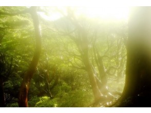 "[Kagoshima Yakushima] giant tree that people in the know ""dragon cedar"" is a must-see! 1 day trekking course"
