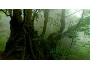 [Kagoshima Yakushima] trekking course to climb the mystery of mountain