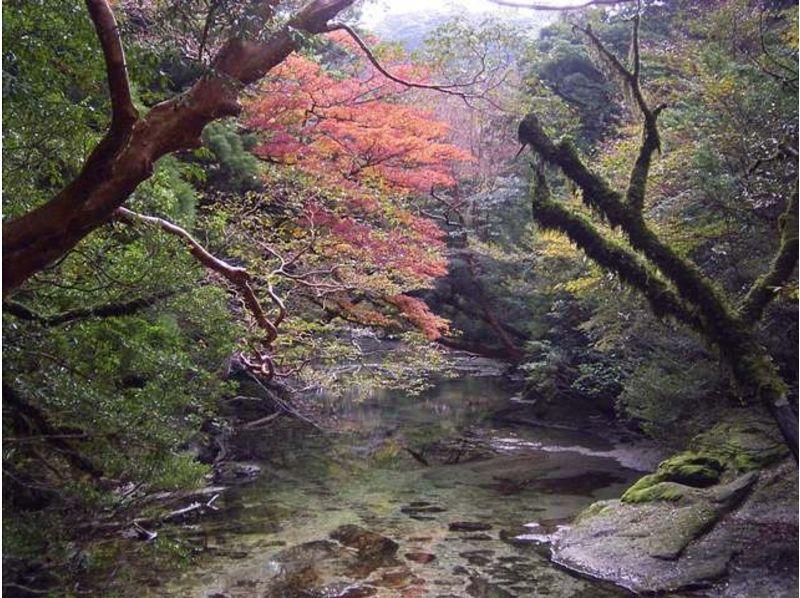 紅葉シーズンおすすめ種目5選 トレッキング(登山・ハイキング)