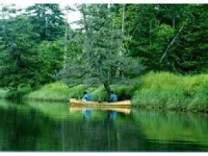 【北海道・オンネベツ川】緑の絶景を見よう【シマフクロウコース】の画像