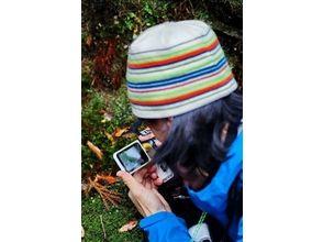 【鹿児島・屋久島】屋久島で素晴らしいコケの森を散歩【半日ツアー】の画像