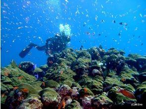 【鹿児島・屋久島】屋久島の海に溶ける!ファンダイビング(2ダイブ)の画像