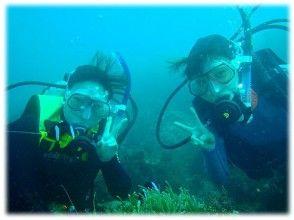 【静岡・熱海】島気分を満喫しながらダイビングにチャレンジ!初島体験ダイビング【現地集合・解散】日本語の画像