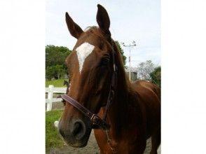 【高知】乗馬体験コースの画像