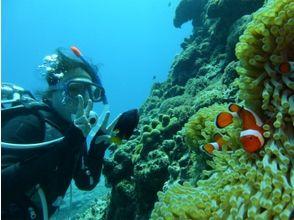 【沖縄・阿嘉島】ライセンス取得者限定!沖縄の海で思い出作りファンダイビングの画像