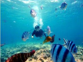 [Okinawa Nago departure] image of Busena de boat fan diving (refresher course)