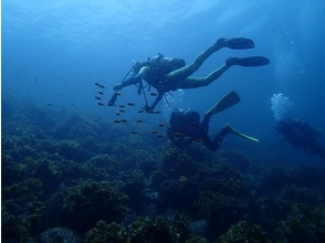 [Aichi Toyota] Let's start with! Open water course [diving license acquisition]