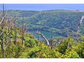 【東京都 三宅島】離島ならではの自然を満喫!ネイチャーガイド半日ツアーの画像