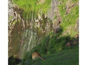 【北海道・知床】断崖から流れ落ちる滝を目指して散策!フレペの滝ネイチャーウォッチングの画像