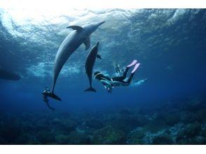 [Tokyo, Miyake Island] dolphin lovers large set! Dolphin swim to go from Miyakejima