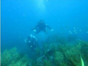【四国・日帰り体験ダイビング】『広島駅発』珊瑚と熱帯魚の四国の海で、じっくり2本ダイビング