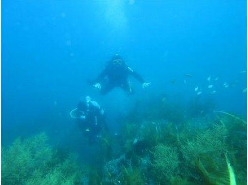 【四国・高知】きれいな海を満喫できる日帰り体験ダイビング~!
