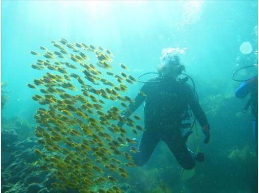 【中国・倉橋島】多種多様なマクロ生物を観察できるツアー【日帰り・2ビーチ】