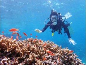 【リフレッシュダイビング】ガイドとマンツーマンだから安心♪石垣島のキレイな海でのんびり☆2ダイブ☆の画像