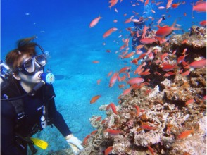 【Refresh Diving】 Guides and one-to-one safe ♪ Plenty of clean Ishigaki Island's ocean ☆ 3 dive ☆ image