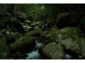 【完全貸切ガイド】神秘的な苔の森を歩く!白谷雲水峡トレッキング【安心・安全・超充実】の画像
