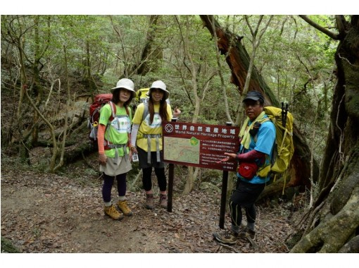屋久島ガイドツアー(Yakushima guide tour)
