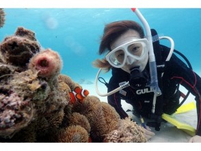 [Limited to 10 Ishigakijima Islands! Enjoy the large part of the beautiful island · longing coral of Churaumi! Experience diving course ♪ (half day course) image