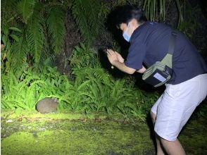 【鹿児島・奄美大島】奄美の杜を探検しよう!ガイド付き「野生生物観光ナイトツアー」4才~参加OK!