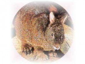 【鹿児島・奄美大島】奄美の杜を探検しよう!野生生物観光ナイトツアー(ガイド付き)の画像