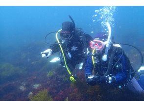 [Shizuoka Higashiizu] PADI Open Water Diver [private] (e-learning)