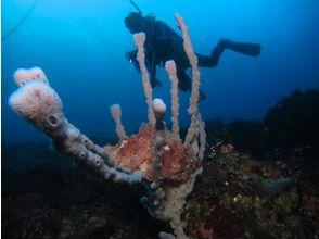 TOKYO / Izu Oshima] doing Let's first diving ★ Diving ★