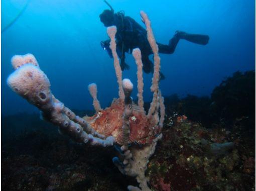 TOKYO / Izu Oshima] doing Let's first diving ★ Diving ★の紹介画像