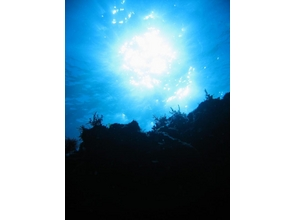 TOKYO / Izu Oshima] guidance all over the sea of Izu-Oshima! ★ fan diving ★