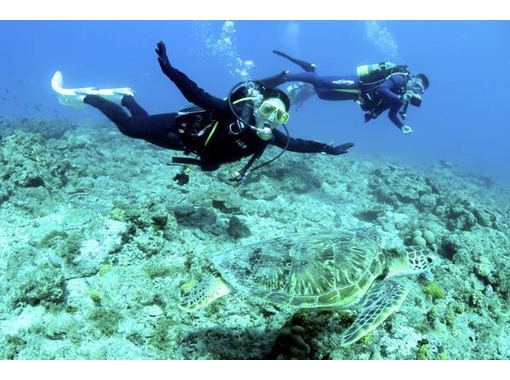 【鹿児島・奄美大島】ダイビングポイント多数の奄美大島を満喫!ファンダイビング