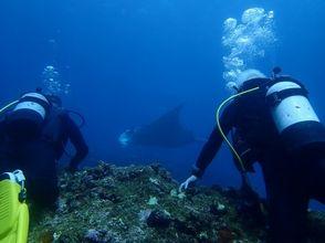 【沖縄 石垣島】ライセンス無しで海中を楽しめる体験ダイビング【1~3ダイブ/ランチ付き】