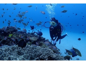 [Kagoshima-Amami Oshima] peace of mind even for beginners! Trying to enjoy the sea of ​​Amami! Diving