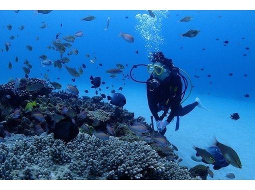 Amami Oshima dive shop Aqua Dive Kohoro (Kohollo)