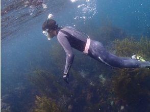 【静岡・伊東】人気NO1プラン!海を楽しんでみよう!体験シュノーケリング(半日コース)の画像