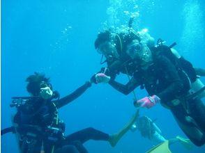 【静岡・伊東】手軽で本格的な海の世界へ!体験ダイビング(半日コース)の画像