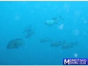 【高知 室戸・柏島】名所も穴場もご案内!!海中の世界を満喫できるビーチファンダイビング【2ダイブ】の画像