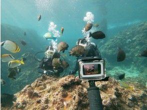 蓝洞船体验潜水之旅【导览记录第一,出发概率第一,舒适设施第一】