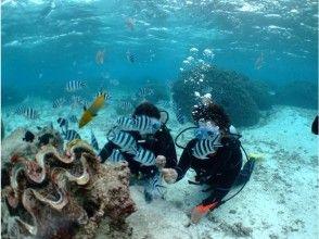 [沖繩]藍色的洞窟乘船去!初學者潛水