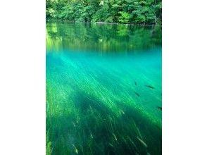 【北海道・支笏湖】国立公園 シュノーケルツアー