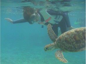 【鹿児島・奄美大島】ウミガメ遭遇率98%!水中カメラレンタル無料♪シュノーケリング体験(半日コース)