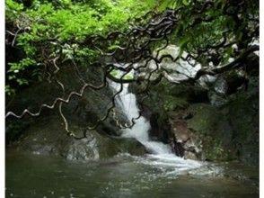 【鹿児島・奄美大島】亜熱帯の滝と湯湾岳!パワースポット散策ツアー(1日コース)の画像