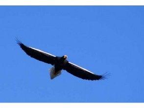 【北海道・知床】オオワシ・オジロワシの観察をしよう!の画像