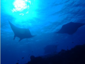 【沖縄・石垣島】八重山の海を堪能しよう!ファンダイビング