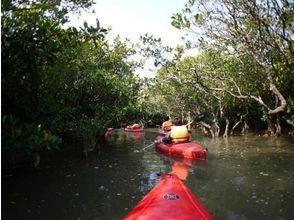 【鹿児島・奄美】マングローブの森をカヌーでめぐる!マングローブカヌーコース