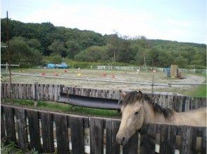 【北海道・北広島】体験乗馬(約30分)の画像