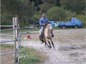 【北海道・北広島】乗馬体験1日乗り放題 ※初心者向け