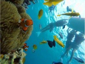[沖繩/前田岬舉行/約2.5小時]幸福在船航行!海葵魚潛水!