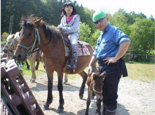 【北海道・北広島】乗馬体験(引き馬:馬場内2周)