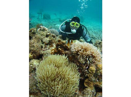 【沖縄・慶良間】ケラマブルーの海を体感!!FUNダイビングツアー