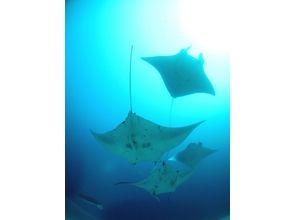 [Okinawa Ishigaki Island] enjoy the Yaeyama of the sea! Fan diving (half-day course: 1DIVE)
