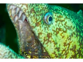 [東京大島伊豆]享受大海的伊豆!開放水域潛水員課程